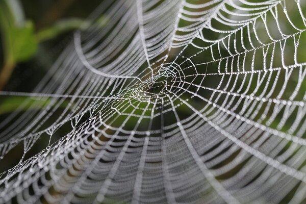 什麼是Python爬蟲?教你輕鬆爬取歌詞網站 spider